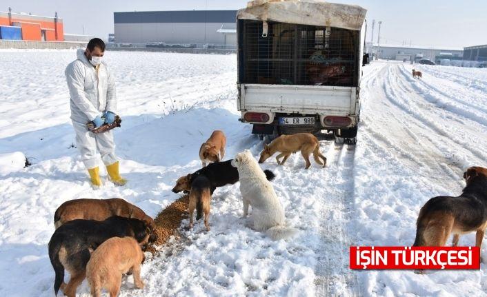 Erenler Belediyesi Sokak Hayvanlarını Unutmadı!
