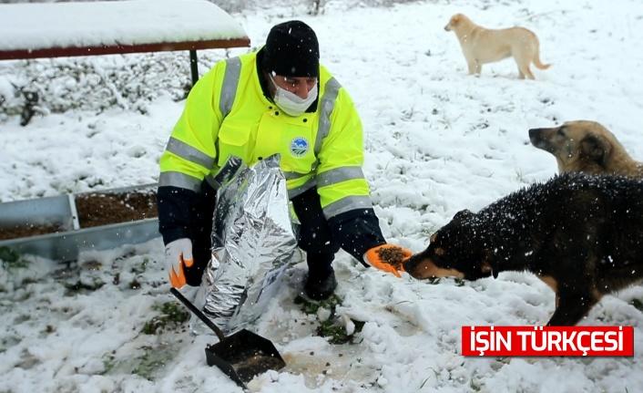 Sakarya Büyükşehir Belediyesi Sokak Hayvanlarını Unutmadı