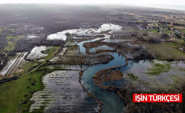 Dünyada ikinci, Türkiye'de ise tek parça halindeki en büyük longoz