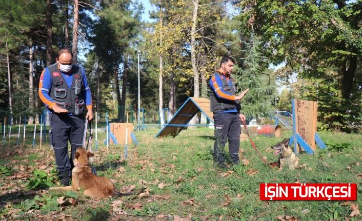 Afetlerde görev alacak altın burunlu köpekler Sakarya'da seçilecek