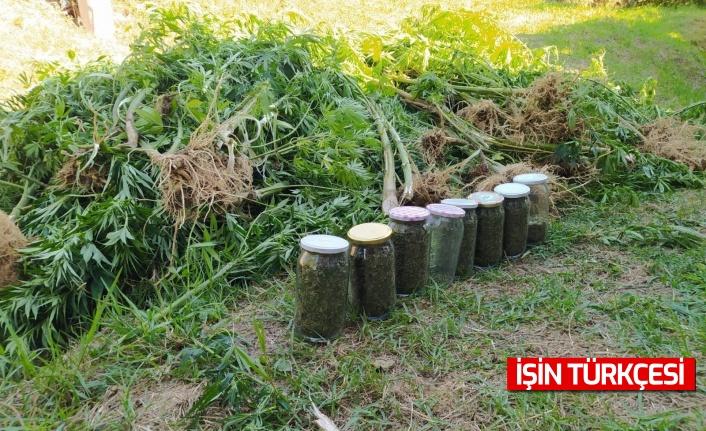 Sakarya'nın Kaynarca ilçesinde fındık bahçesini zehir bahçesine çevirdiler