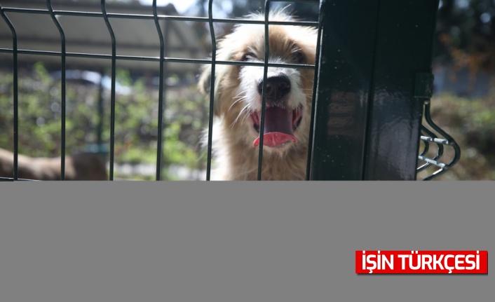"""Sakarya'da açılan barınak sokak hayvanlarına """"yuva"""" olacak"""