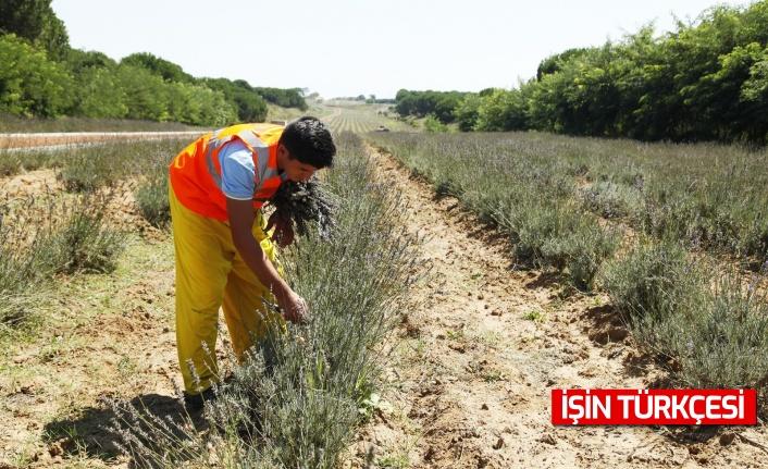 Sakarya'da yüzlerce çeşit bitki piyasaya sunulmak için hazırlanıyor