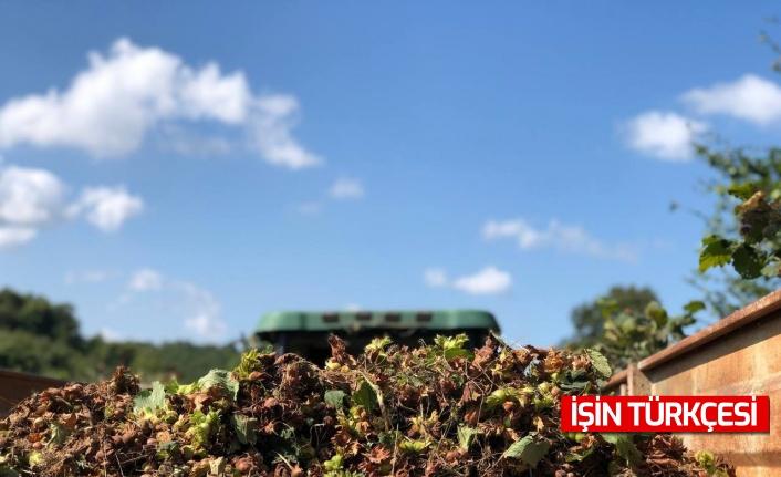 Kaynarca'da fındık hasadında yüzde 20 düşüş yaşandı