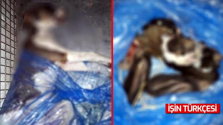 Kan donduran olay! Zehirleyerek öldürdükleri 4 köpekten birinin derisini yüzmüşler