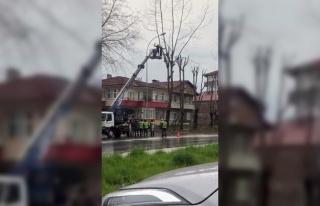 Ağaç Budayan İşçi Vinç Sepetinden Atlayarak...