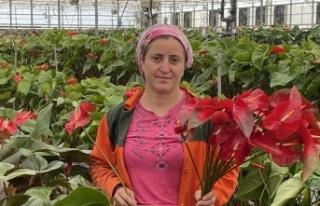 Topraksız tarımın en uzun ömürlü çiçeği Antalya'dan...