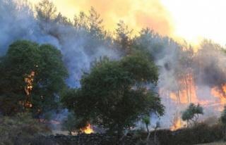 160 yangın kontrol altına alındı, 14'ünü söndürme...
