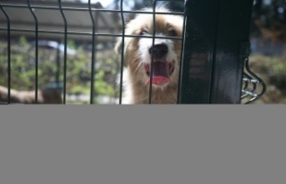 Sakarya'da açılan barınak sokak hayvanlarına...