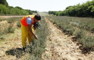 Sakarya'da yüzlerce çeşit bitki piyasaya sunulmak...