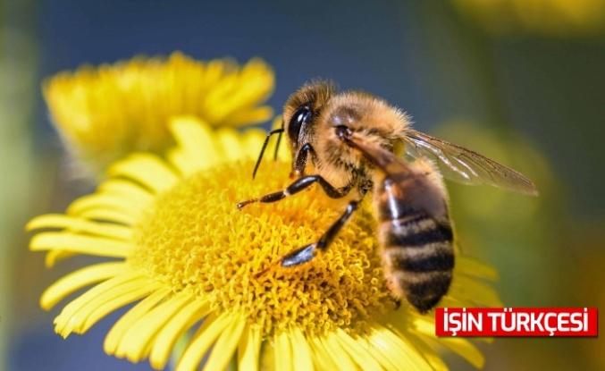 Çiftçilere Bitkisel Üretimde Arı Kullanımı Eğitimi Verilecek